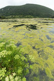 Зеленые озеро и гора Стоковая Фотография