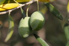 зеленые оливки 2 Стоковая Фотография RF