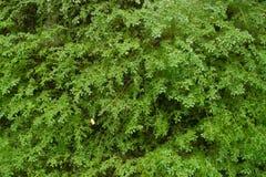 Зеленые папоротник и мох Стоковая Фотография RF