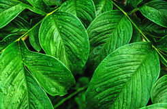 зеленые падения картины и воды лист для предпосылки Стоковое Фото
