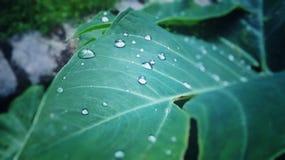 Зеленые падения Стоковые Фото