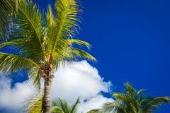 Зеленые пальмы кокоса на синем небе с белыми облаками Pho Стоковые Изображения RF