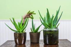 Зеленые пальцы Стоковые Фотографии RF