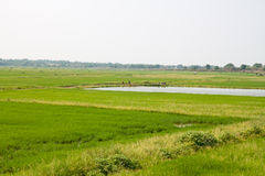 Зеленые поле и лагуна Стоковые Изображения RF