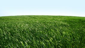 Зеленые поле и ветер сток-видео