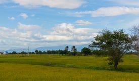 Зеленые поля в Вьетнаме стоковое фото rf