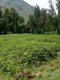 Зеленые поля и гора Стоковое Изображение RF