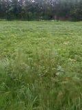 Зеленые поля с заводами Стоковая Фотография RF