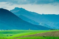 Зеленые поля Стоковые Изображения RF