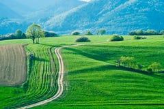 Зеленые поля Стоковые Фотографии RF