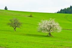 Зеленые поля Стоковое Изображение RF