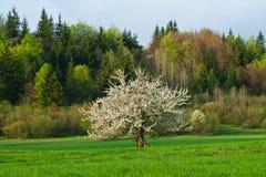 Зеленые поля Стоковые Изображения