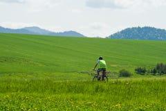 Зеленые поля Стоковые Фото