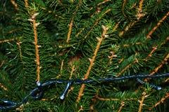Зеленые предпосылка рождества и система светов Стоковые Фото