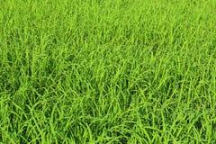 Зеленые предпосылки Стоковые Изображения