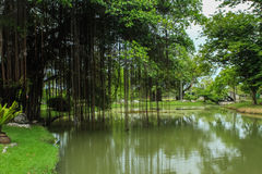 Зеленые природа и озеро Стоковые Фотографии RF