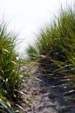 Зеленые плотные трава и pach на песчанной дюне пляжа Стоковая Фотография RF