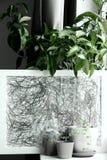 Зеленые растения в баках дома Стоковое Изображение RF