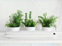 Зеленые растения в белом декоративном керамическом баке стоковые изображения