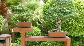 Зеленые растения в японской задворк культуры Стоковая Фотография
