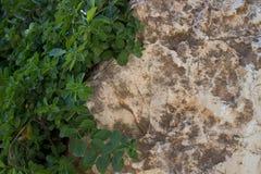 Зеленые растения и камень Стоковые Изображения