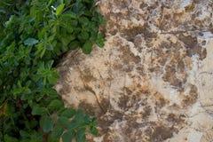 Зеленые растения и камень Стоковое Фото