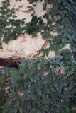 Зеленые растения и камень Стоковое фото RF