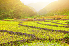 Зеленые растения и солнечность Стоковая Фотография RF