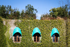 Зеленые растения на старой стене на солнечном дне Стоковые Фотографии RF