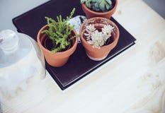 Зеленые растения на таблице Стоковое Изображение RF