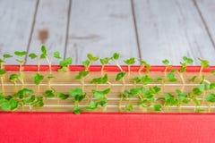 Зеленые растения растя в страницах книги Стоковое Изображение RF