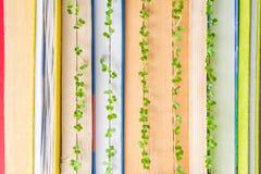 Зеленые растения растя в страницах книги Стоковые Изображения RF