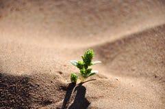 Зеленые растения Стоковое Фото