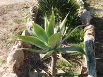 Зеленые растения Стоковые Фотографии RF