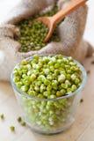 Зеленые ростки фасоли mung в шаре и hessian кладут в мешки с семенами стоковая фотография rf