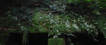 Зеленые руины Стоковая Фотография