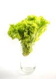 Зеленые салат и стекло Стоковая Фотография RF