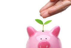 Зеленые сбережения Стоковое Изображение
