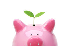 Зеленые сбережения Стоковые Фото