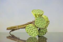 Зеленые семена лотоса Стоковые Изображения