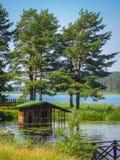 Зеленые сосны на озере Стоковое Фото