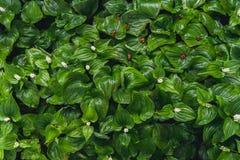 зеленые сочные заводы Стоковые Фотографии RF