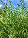 Зеленые стержни стоковое фото rf