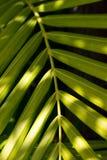Зеленые тропические листья и свет солнца стоковое фото rf