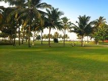 Зеленые лужайка и пальмы Стоковая Фотография RF
