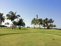 Зеленые лужайка и пальмы Стоковые Изображения