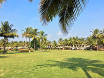 Зеленые лужайка и пальмы Стоковые Изображения RF