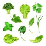 Зеленые установленные овощи и травы иллюстрация штока