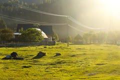 Зеленые лучи лужайки и солнца Стоковые Фотографии RF
