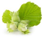 Зеленые фундуки на белой предпосылке стоковая фотография
